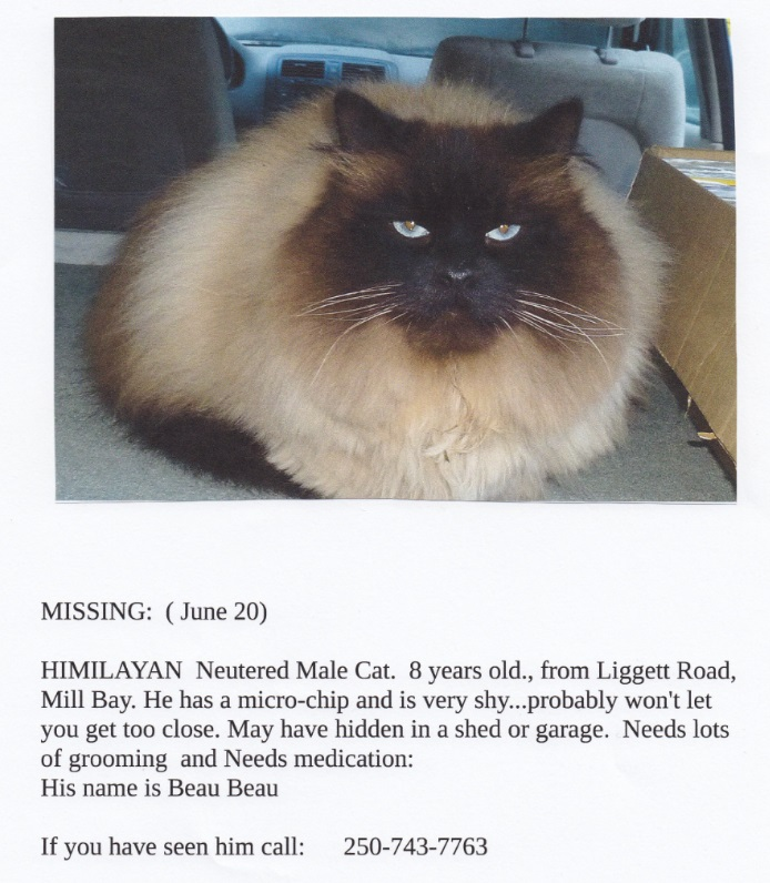 Missing CAT Himilayan June 20